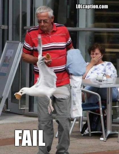 funny-pictures-bird-owns-icecream