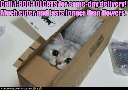 funny-picture-1800-lol-cat-in-box