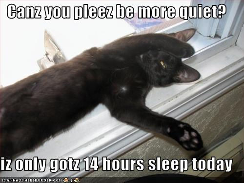 funny cat pictures i only got 14 hours sleep please be quiet
