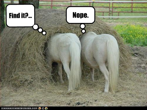 funny animal pictures pony search party