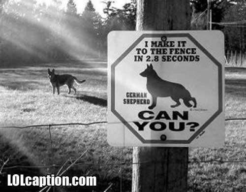 funny-dog-pics-dog_run