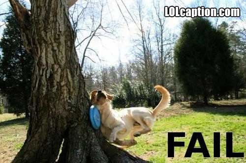 funny-fail-pics-dog-crashes-into-tree-fail1