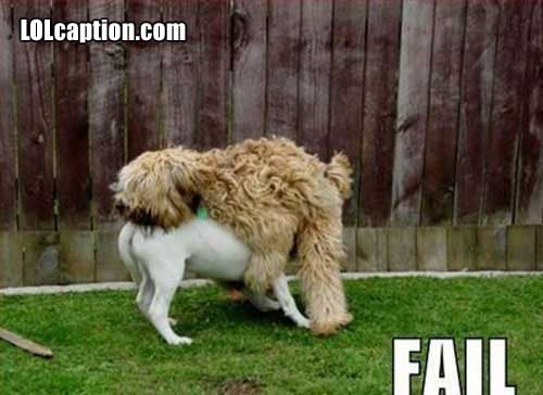 funny-fail-pics-dog-mating-epic-fail-wrong-way-round