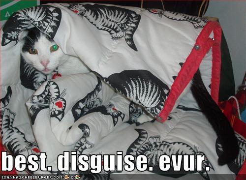 funny cat pics camo cat