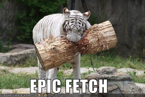 funny cat pictures epic fetch cat fetches tree tiger