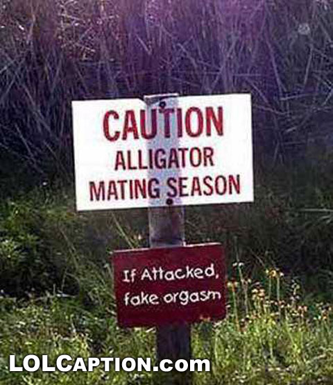 caution-aligator-mating-season-if-attacked-fake-orgasm