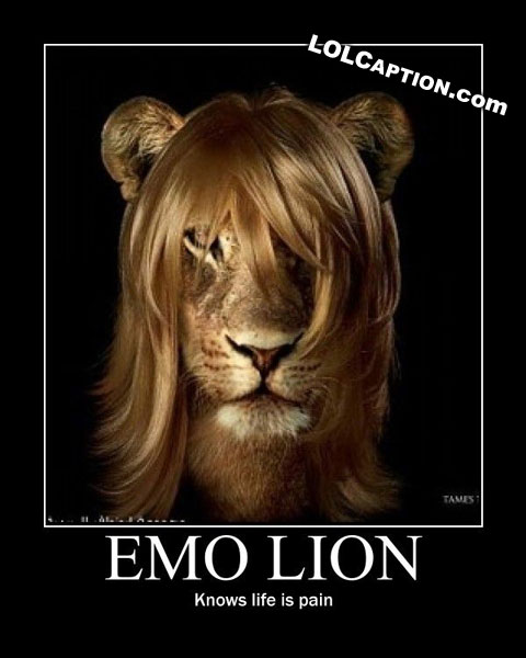 lolcaption-emo-lion-knows-no-pain-emolion