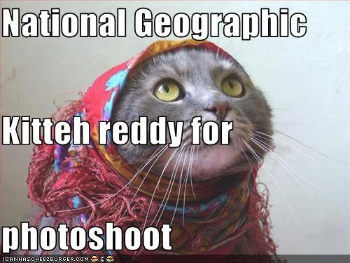 funny cat pictures national geographic cat