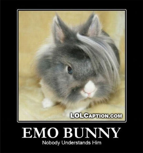 emo-bunny-demotivational-poster-lolcaption