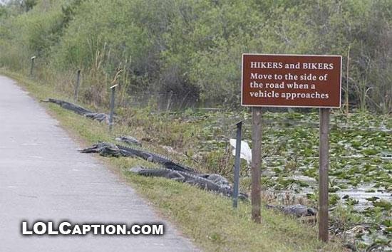 lolcaption-funny-fail-pics-move-to-side-of-road-crocodiles