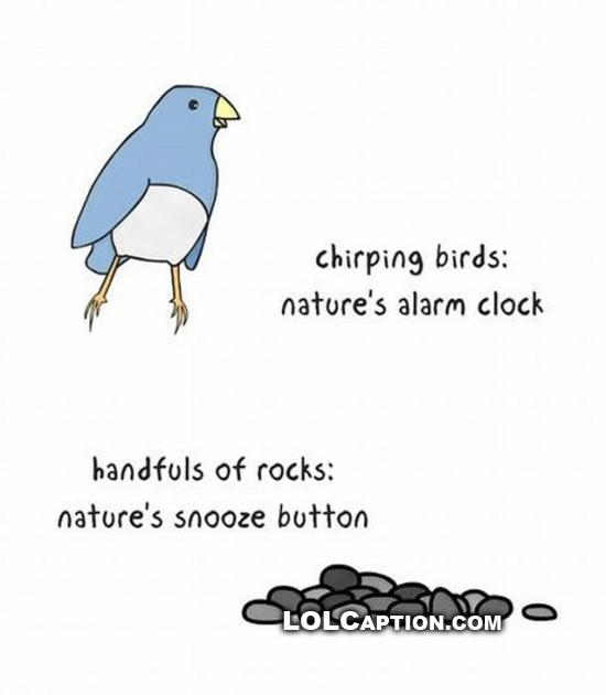 lolcaption-chirping-birds-natures-alarm-clock-rocks-natures-snooze-button