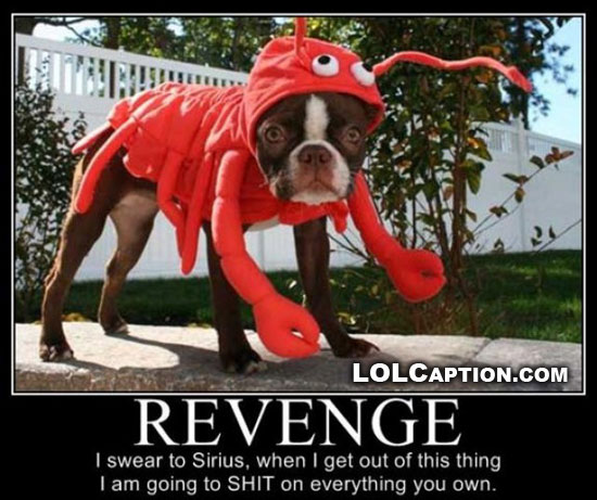 revenge-is-a-bitch-lolcaption-funny-demotivational-pictures