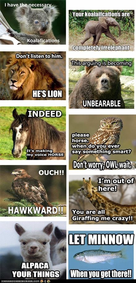 funny-pictures-with-funny-captions-animal-commentary