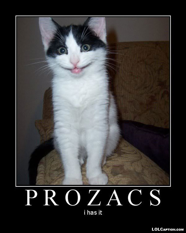 funny-demotivational-posters-lolcaption-prozacs-i-has-it-funny-pictures-of-cats