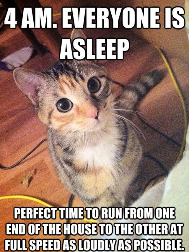 funny cat pictures with captions   lolcaption     funny