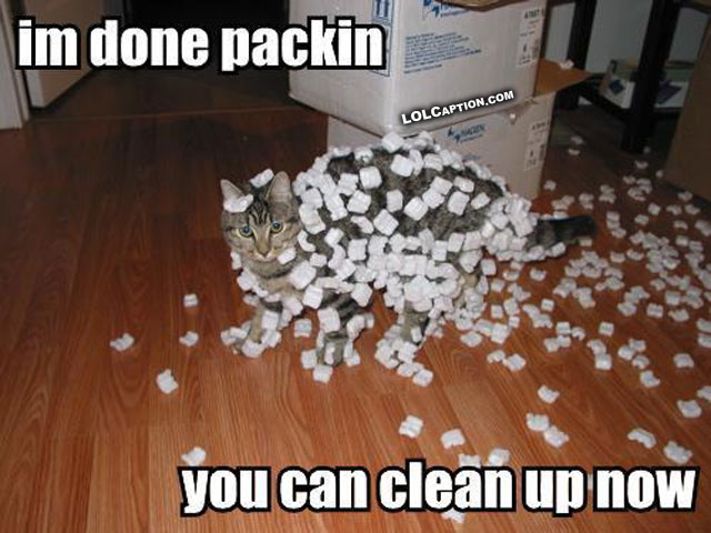 funny-cat-pictures-with-captions-photos-cats-humor-funnies-lolcaption