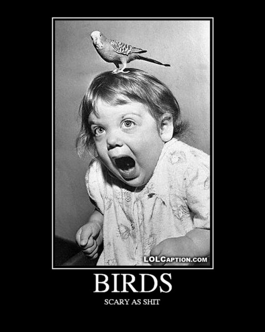 lolcaption-demotivational-birds-scary-funny-antimotivational-poster