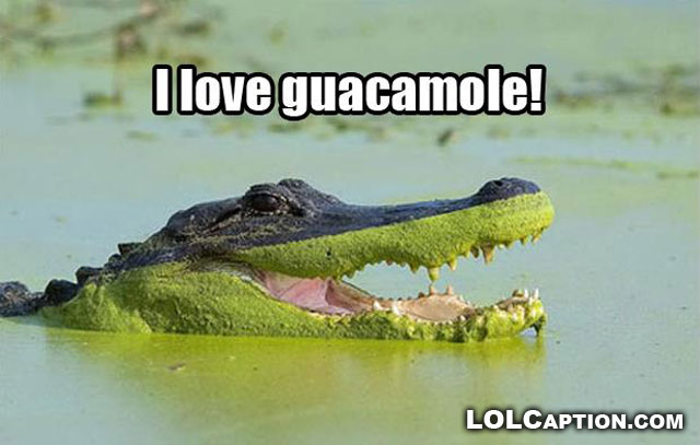guacamole-lolcaption-funny-animal-photos-with-captions