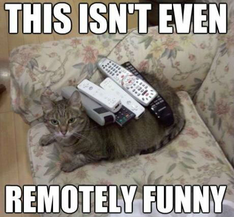 Is this remotely funny? - Funny Cat Pictures with Captions