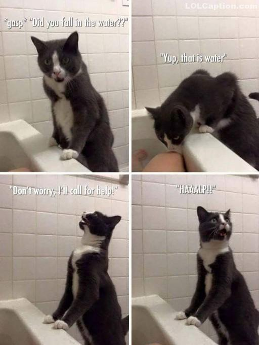 funny-cat-call-for-help