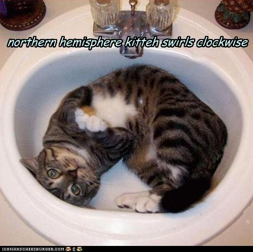 funny-pictures-northern-hemisphere-kitteh