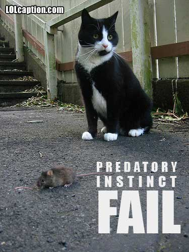 funny-pictures-cat-mouse-fail
