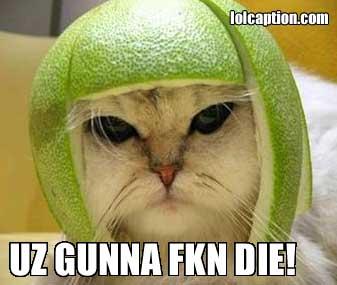 funny-pictures-kitteh-lolcat-uz-gunna-fkn-die