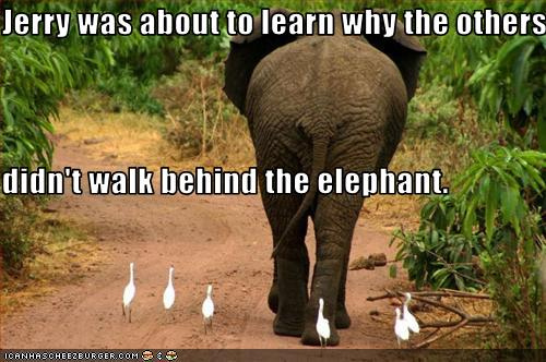 funny animal pictures dont walk behind the elephant