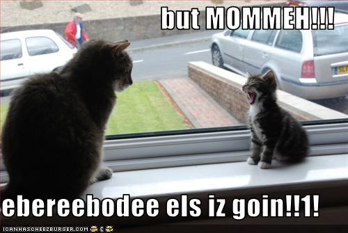 funny cat pictures lolcats but mum everybody else is going