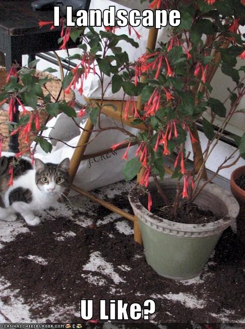 funny cat pictures lolcats kitteh landscaping services i landscape u like