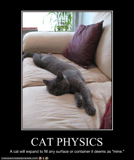 funny cat pictures cat physics explained