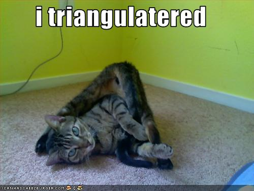funny cat pictures triangle cat i traingulated
