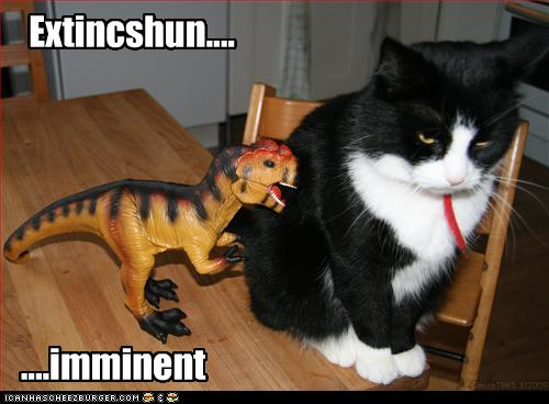 funny cat picture extincshun imminent dinosaur cat