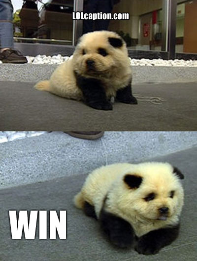 funny-win-pictures-panda-dog