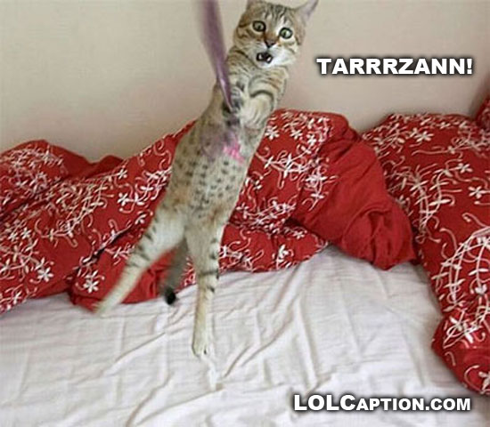 funny-lolcaption-tarzan-cat-lolcat
