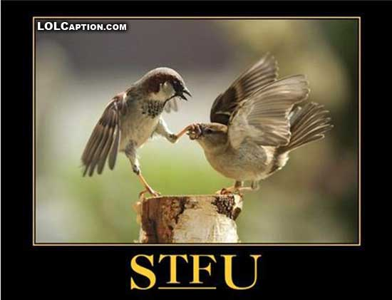 lolcaption-funny-demotivational-pics-stfu