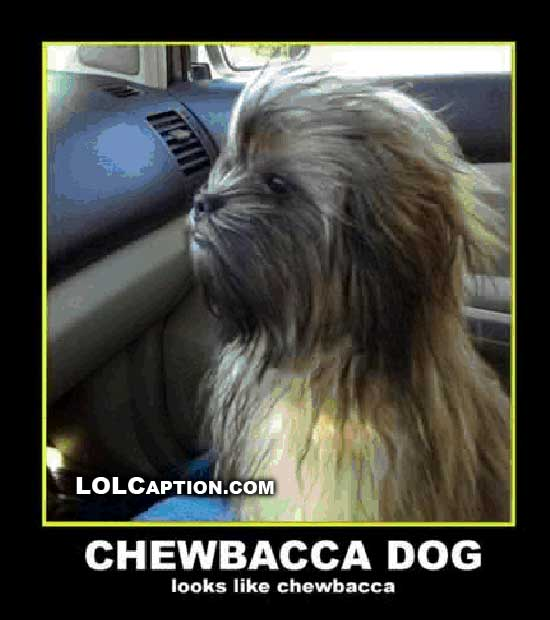 chewbacca-dog-demotivational-pictures-lolcaption-funny