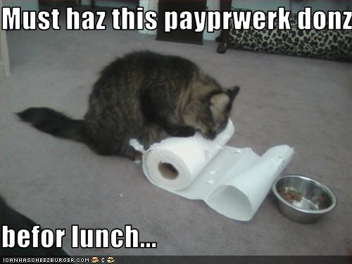 funny cat pictures kitteh does paperworks