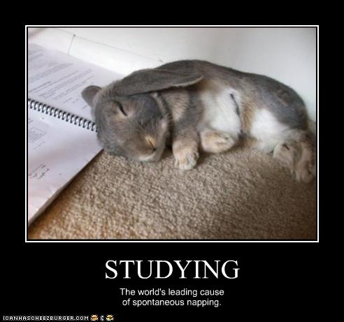 funny-animal-pictures-studying-the-worlds-leading-casue-of-napping