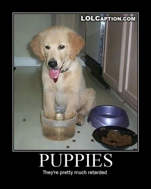 Puppies-are-retarded-lolcaption-funny-demotivational-posters