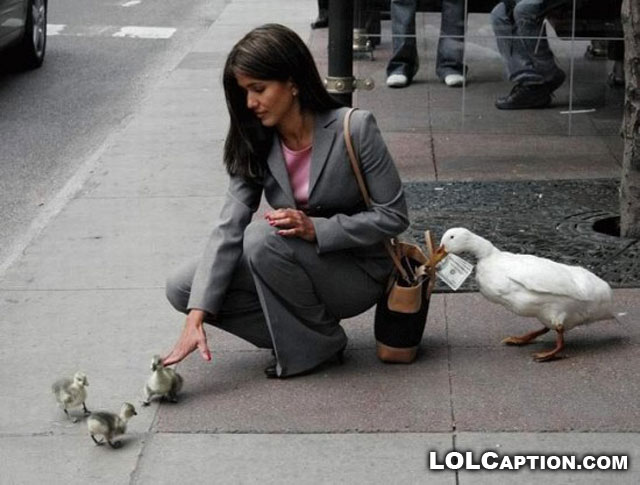 pickpocket-ducks-lolcaption-funny-picture