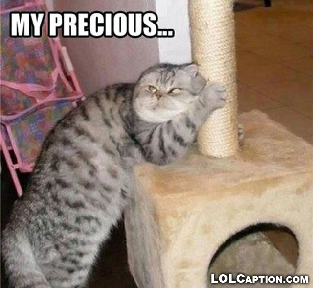 funny-cat-pictures-with-captions-cats-sayings-photos-my-precious