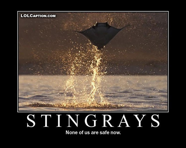 lolcaption-funny-pictures-with-captions-demotivational-stingrays